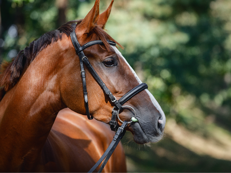 British Equine Veterinary Association achieves Bronze accreditation for environmental commitment