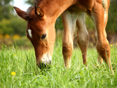 What is the equine microbiome?
