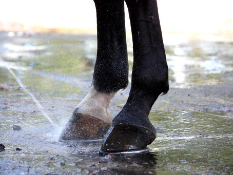 Cold hosing – the gold standard in reducing foot pain