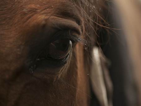 From racehorse to therapy horse