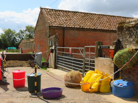 What is the best way to manage an equine strangles outbreak?