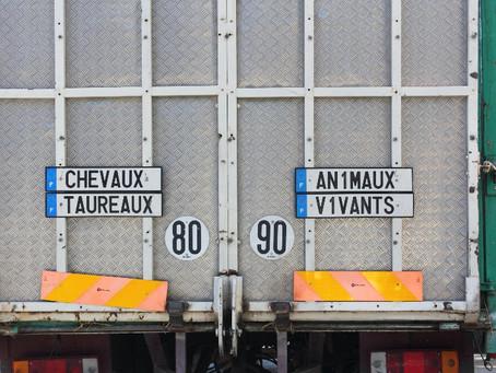 Progress on animal transportation regulations