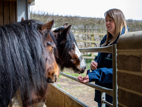 A tale of two ponies and their rescue