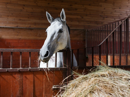 How can we prevent gastric ulcers in horses?