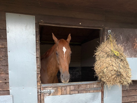 Equine gastric ulcer syndrome - EGUS: the facts