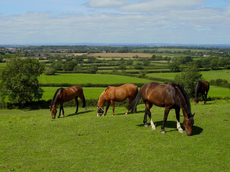 Is spring grass the best grass for horses?