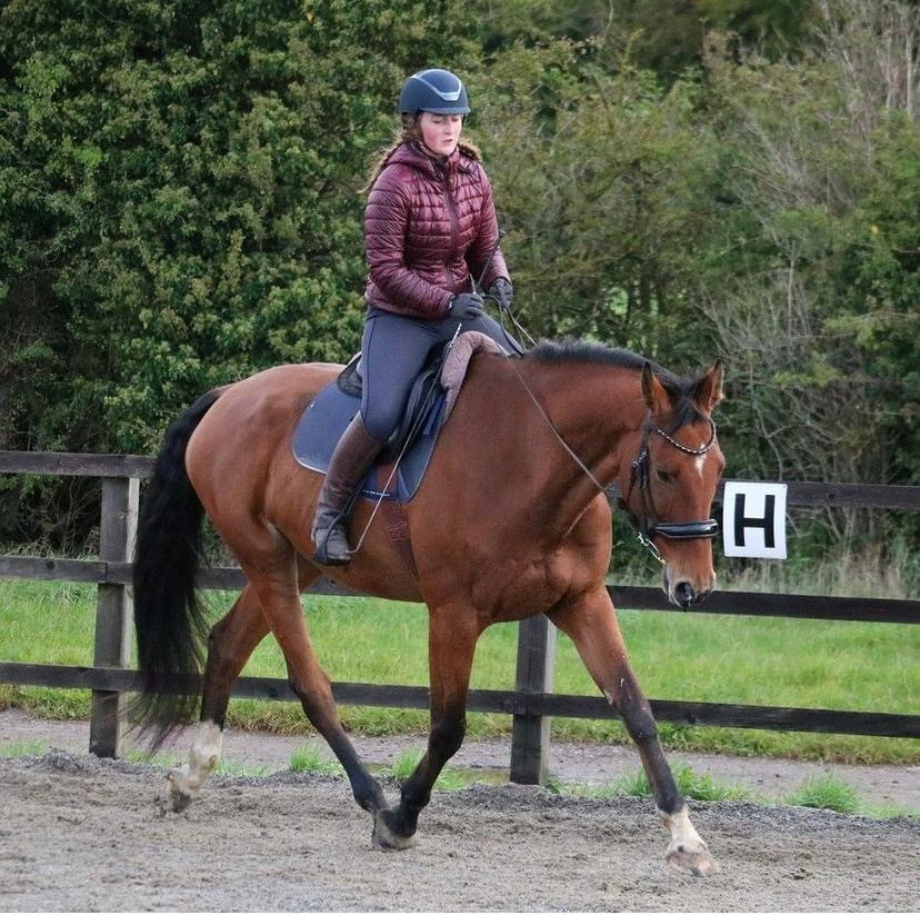rider position, the horse hub