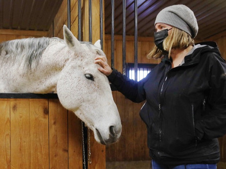 Horses help owners through lockdown
