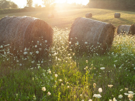 Finding the best hay for horses