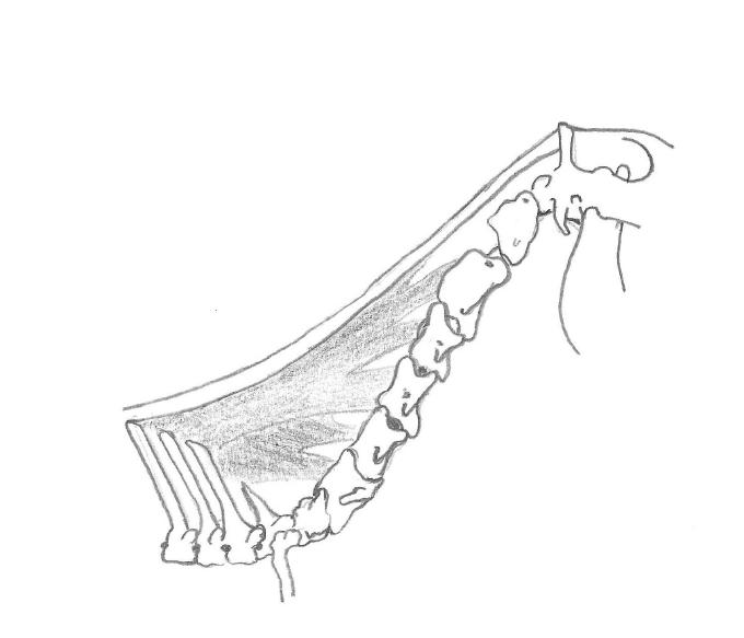 horse anatomy, the horse hub