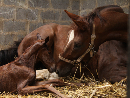 Equine immunology – why do we need vaccines for horses?