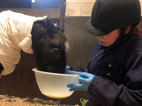 Foal set alight in suspected arson attack is recovering gradually