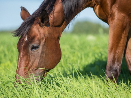 Why does my horse eat soil?