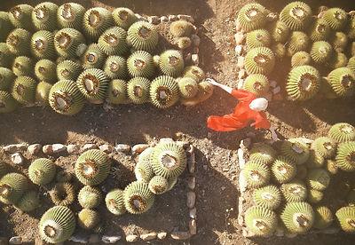 Cactus_Motiv5.jpg