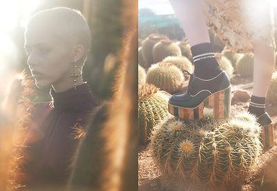 Cactus_Motiv3.jpg