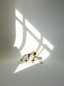 My dog Pippo