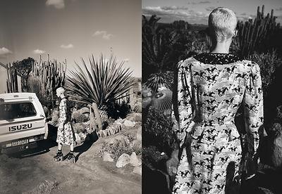 Cactus_Motiv6.jpg
