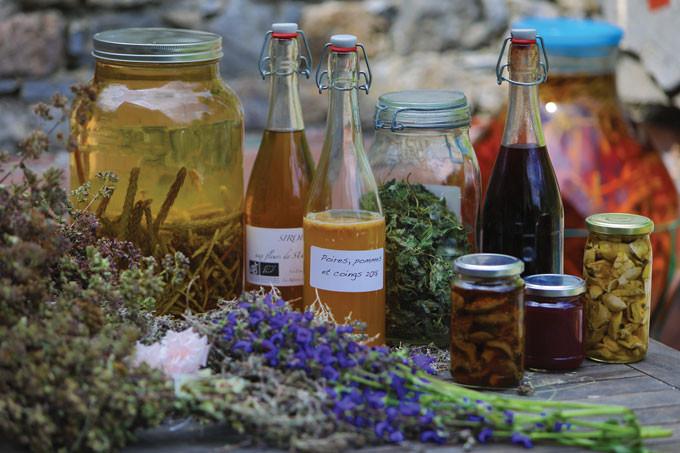 Huiles, sirops de plantes, tisanes