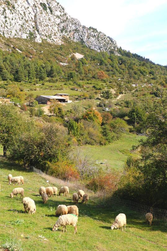 L'élevage de Dominique & Jean-Philippe Girod