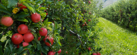 La Pomme Gourmande