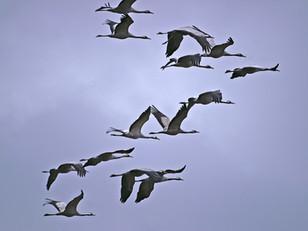 La cohabitation avec les oiseaux, une nécessité pour l'avenir