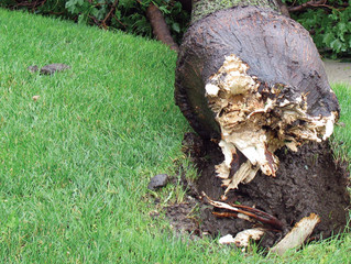 Abiotic Problems And Tree Care Living organisms aren't the only factors that cause injuries and dama