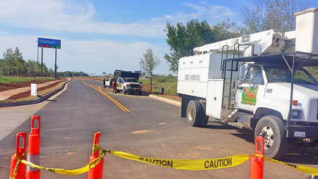 tree removal oklahoma city