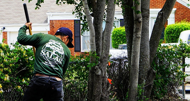 tree trimming, tree trimmer, tree removal, tree service