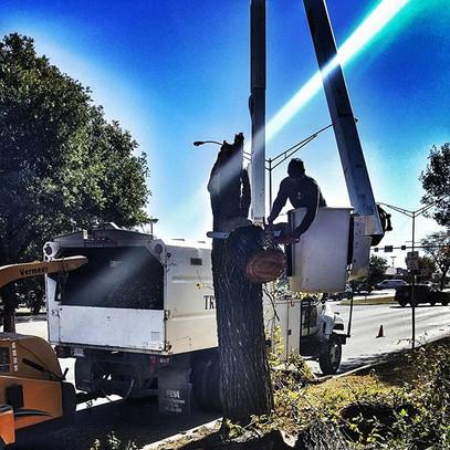 tree removal, tree service