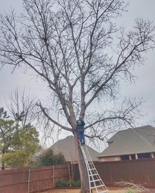 tree trimming before