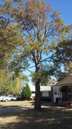 tree trimming edmond