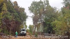 tree removal in oklahoma city