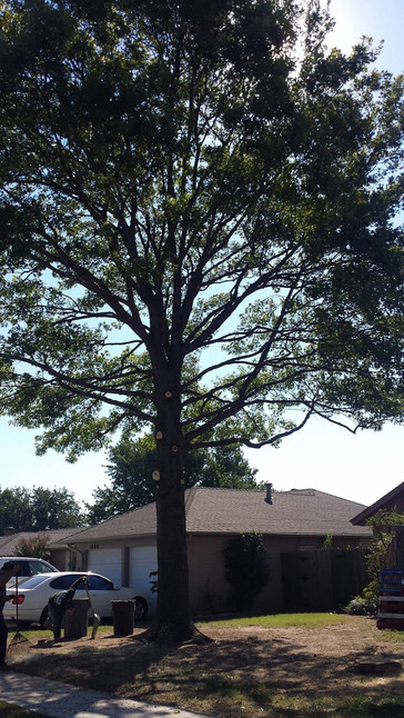 after tree trimming oklahoma city