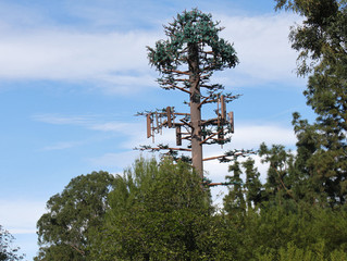 Take a Look at America's Least Convincing Cell Phone Tower Trees