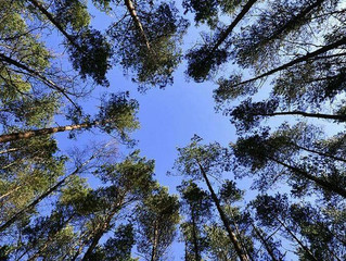 Forest Fighting Back On Air Pollution