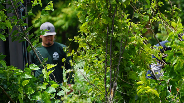 tree removal, tree removal service