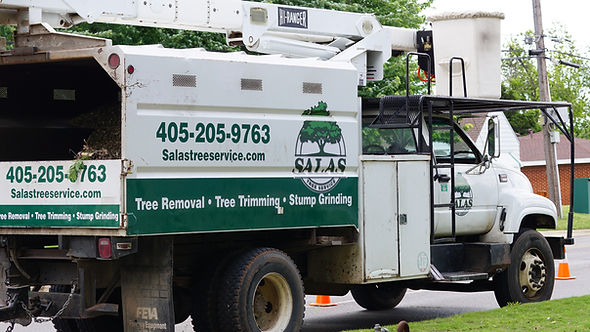 Tree removal, tree trimming, tree trimmer