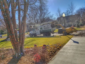 Top Rated Tree Service In Oklahoma City