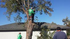 tree removal yukon