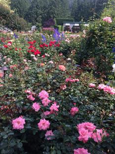 011_garden.jpg
