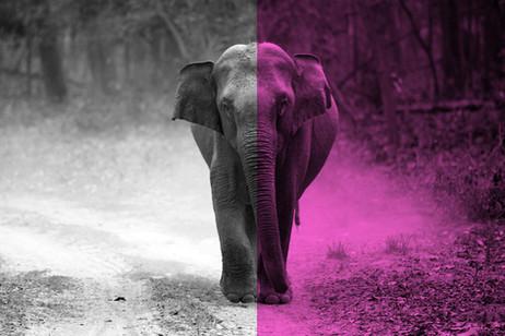 הפיל והיתד – לא לפילים בלבד