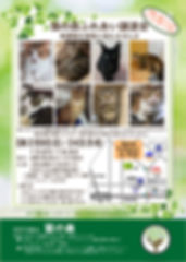 200209譲渡会告知ポスター.jpg