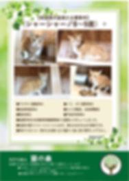 シャーシャー 募集ポスター20200403.jpg