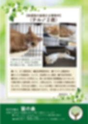 テル 募集ポスター20190921.jpg