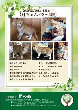Qちゃん 20190424 募集ポスター(多頭飼育の猫編).jpg
