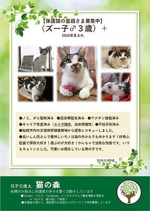 [エイズ猫用]ズー子.jpg