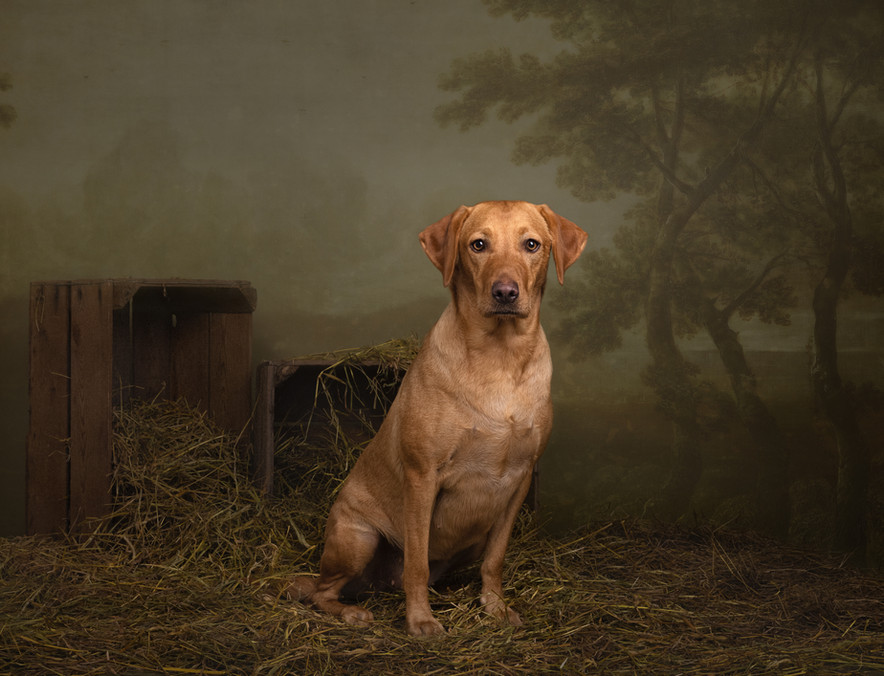 norfolk-dog-photographer-1T8A6193-Edit.j