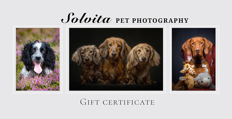 norfolk dog photographer photoshoot gift certificate