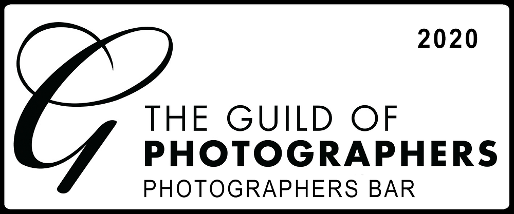 Norfolk dog photographer image award 2020