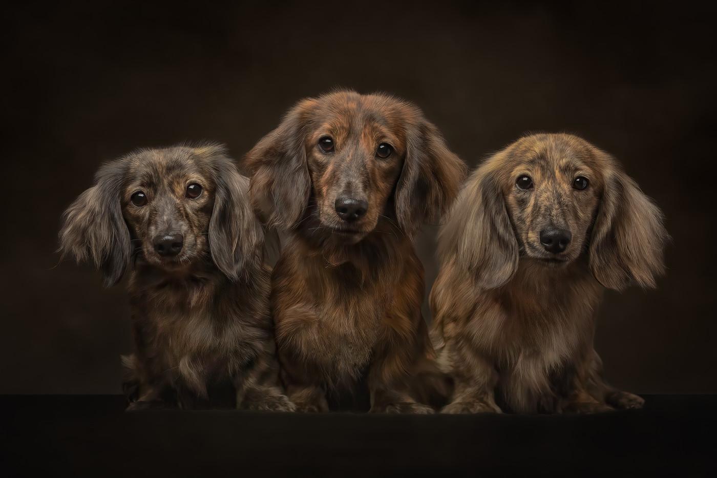 norfolk-dog-photographer-EL1A8945-Edit-2